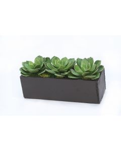 Hen and Chicken Succulents in Black Planter