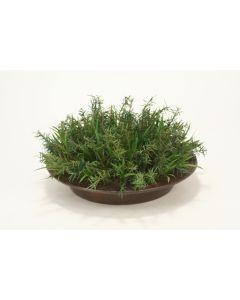 Rosemary In Vigan Round Planter