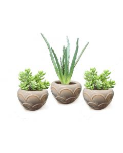 Green Succulent Stems in Small Scallopped Beige Round Bowl - 3 Pc Set