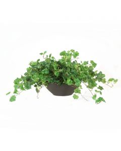 Geranium Bush in Oval Planter