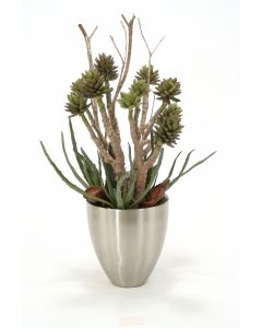 Mixed Aloe and Succulents With Natural Product in A Metal Vase