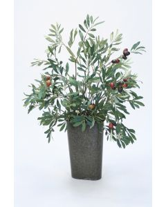 Olive Tree in a Wall Pocket