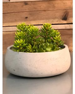 Senecio and Echeveria Garden with Rocks, Moss and Sand in Gray Bowl.