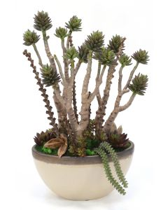 Succulent Tree with Mixed Succulents in Oval Ceramic Planter