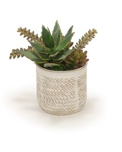 Succulents in Wheatfield Pot