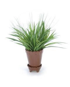Grass in Chocolate Flower Pot
