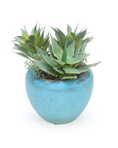 Succulent Garden in Turquoise Pot