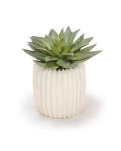 Starburst Succulent in Ribbed Vase