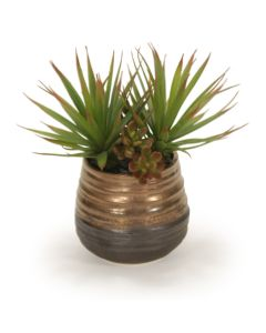 Succulents in Blue and Bronze Pot