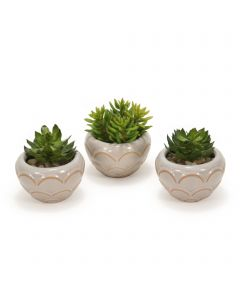 Hen and Chicken and Succulent in White Pots (Set of 3)