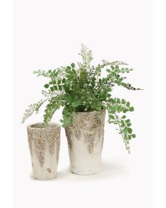 Maiden Hair Fern in Tall Aged Container with Matching Container