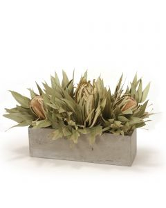 Banksia with Dried Eucalyptus in Concrete Window Box