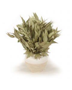 Natural Eucalyptus with Foliage in White Earthenware Vase