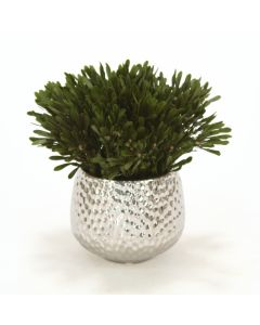 Oasis Green Platys Foliage In Silver Super Nova Planter