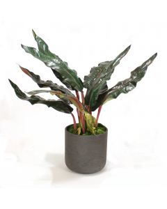 Birds of Paradise Leaves in Black Wash Planter