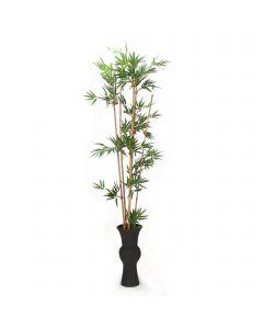 Bamboo in Black Vase