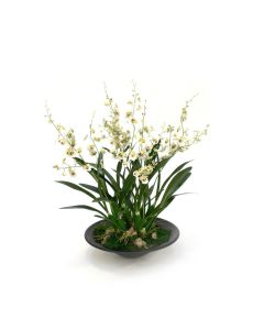Dancing Orchids in Black Oval Planter