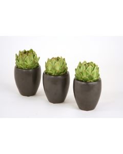 Green Artichoke in Black Pot - Set of 3
