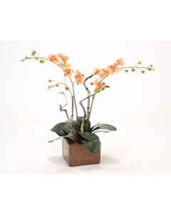 Light Rose Gold Phaleonopsis Orchid in Small Square Planter