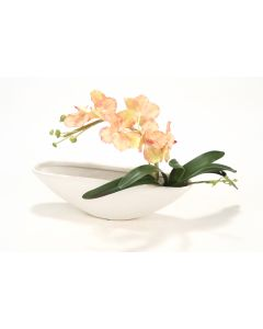 Orchids, Foliage in Oval Planter