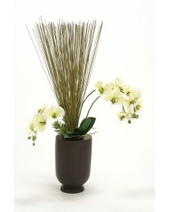 Orchids, Marsh Reeds, Succulents in Matte Black Wood Vase