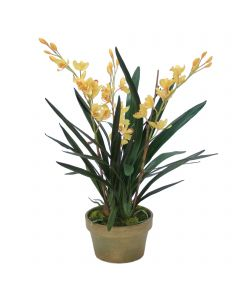 Yellow Cymbidium Orchids in Aged Pot