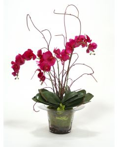 Violet Orchid with Kiwi Vines, Birch Twigs and Preserved Orchid Bark in Glass Planter