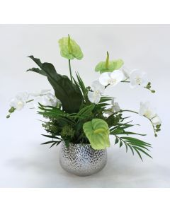 Tropical White Phalaenopsis Orchid with Green Anthuriums in Silver Container