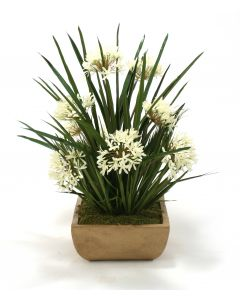 Cream White Agapanthus, Blades, Bulb Foliage in Honey Walnut Square Stone Tray