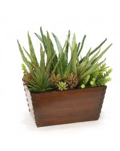 Mixed Succulents in Wood Box