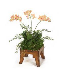 Mini Orchids in Wooden Square