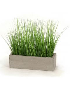 Grass in Concrete Window Box