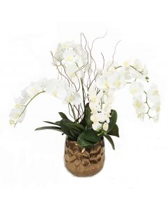 Cream White Phalaenopsis Orchids in Gold Planter