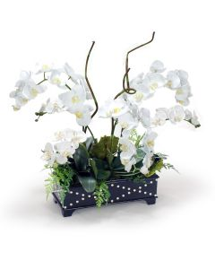 White Phaleanopsis Orchids in Black Box with Silver Accents