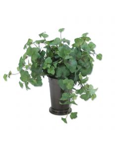 Hedera Ivy in Mint Julep Vase