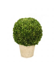"26"" Round Boxwood in Terra Cotta Pot"