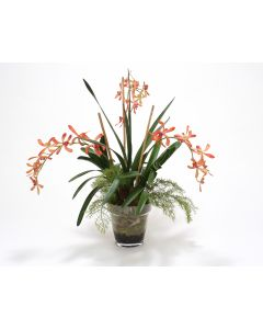 Orange Vanda Orchid with Orchid Foliage in Glass Flower Pot