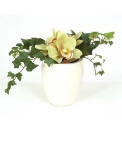 Green Cymbidium Orchid Bouquet in White Ceramic Vase