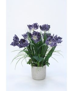 Blue Parrot Tulip in Concrete Planter