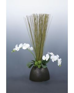 Phalaenopsis Orchid Garden in Bamboo Planter