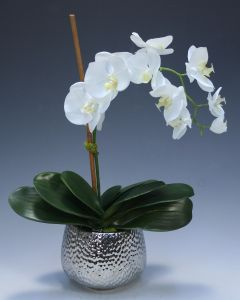 Cream White Phalaenopsis Orchid in Silver Hammered Metal Vase