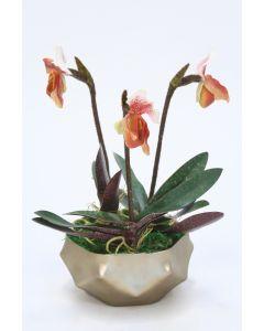 Lady Slipper Orchids in Ceramic Pot