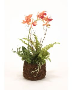 Gold-Burgundy Phaleonpisis Orchid in Bird Nest (Sold in Multiples of 4)