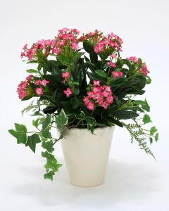 Fuchsia Kalanchoe and Ivy Plant in Beige Ceramic (Sold in Multiples of 2)
