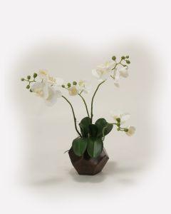 White Phalaenpsis Orchid in Dark Bronze Roe Bud Vase
