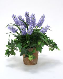 Periwinkle Hyacinths and Ivy in Weathered Pot