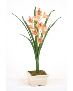 Mauve Cymbidium Orchid in Pot