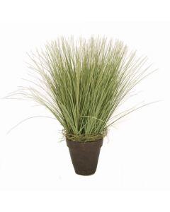 Basil Grass in Rust Pot