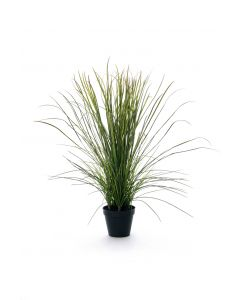 Potted Plastic River Grass in Liner