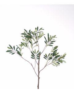 Olive Leaf Spray in Green